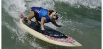 US-ANIMAL-SURF-DOG